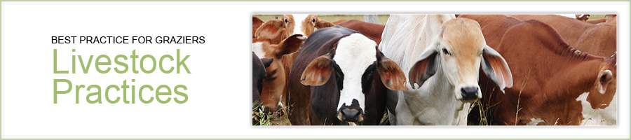 Best practices for graziers - livestock practices